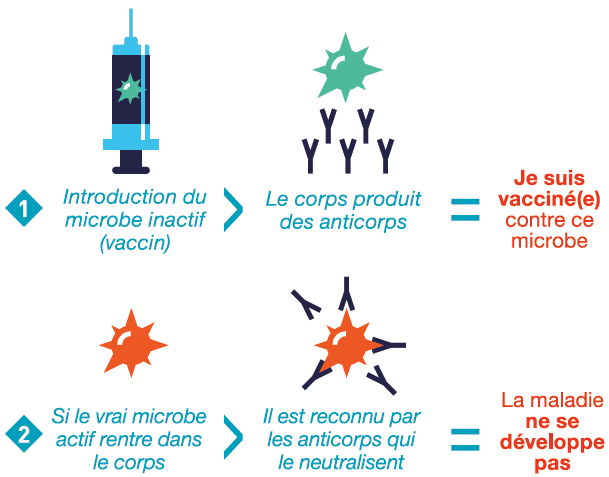 Schéma explicatif du fonctionnement d'un vaccin